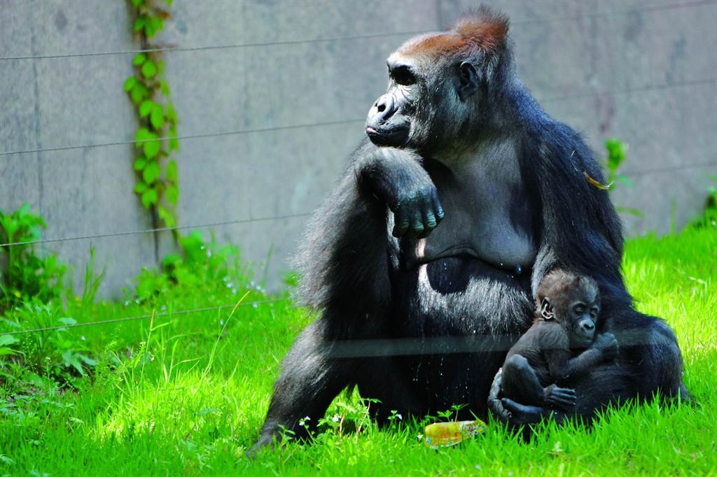 2008年2月17日是一个让人值得喜庆的日子,上海动物园的一头名叫