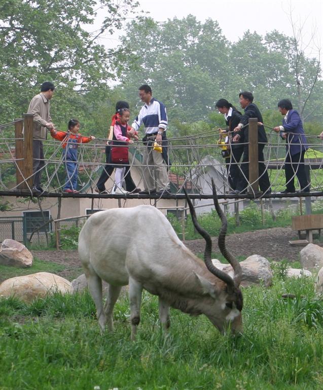 无须防范天敌的侵害以及其它动物种类