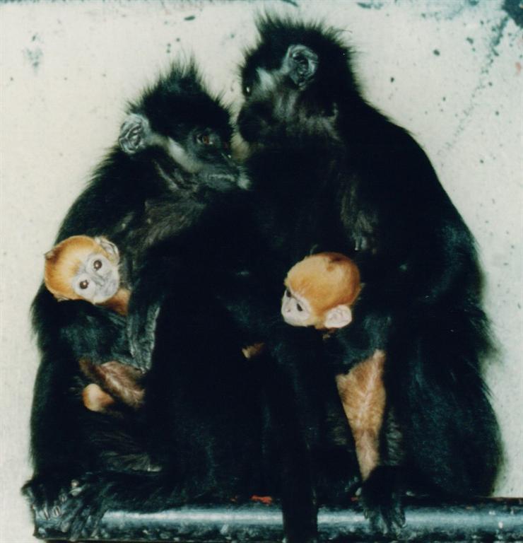 的有趣的动物宝宝们