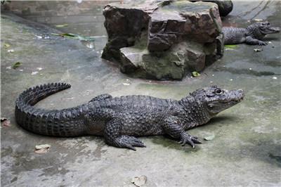 走进上海动物园两栖爬行动物馆