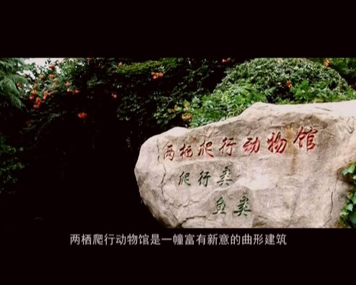 宣传片-两爬动物篇