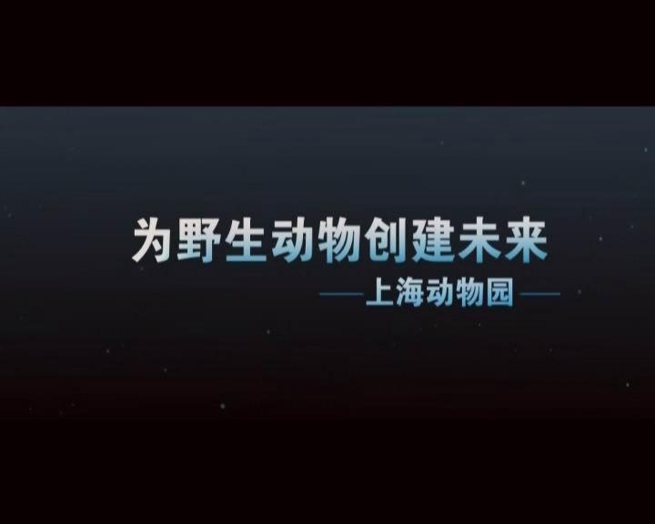 上海动物园宣传片
