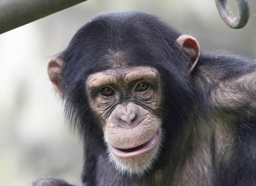 动物叫声的词-描写动物叫声的词语